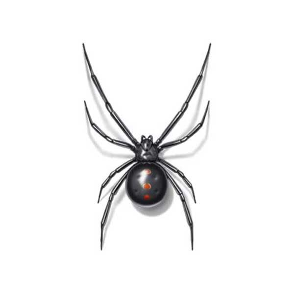 Black widow prevention and control in Alexandria and Fairfax VA - Ehrlich Pest Control, formerly Connor's Termite and Pest Control