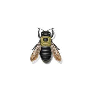 Bumblebee prevention and control in Arlington and Fairfax VA - Connor's Termite & Pest Control